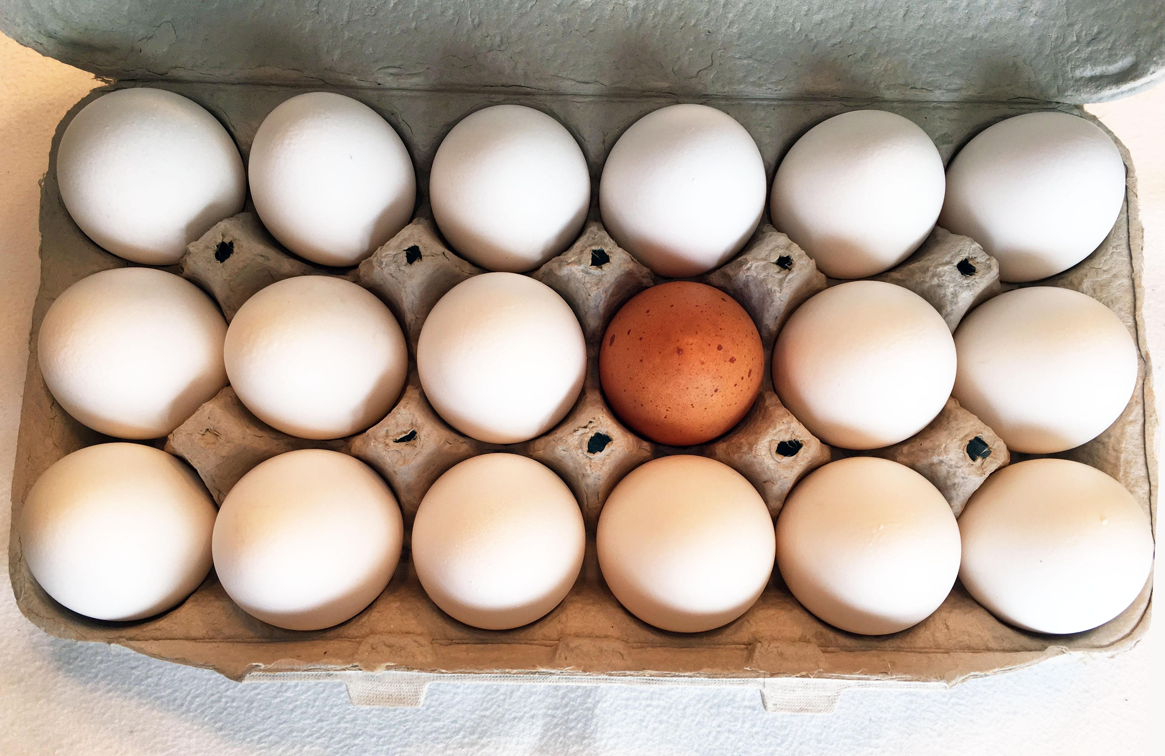 œufs contaminés